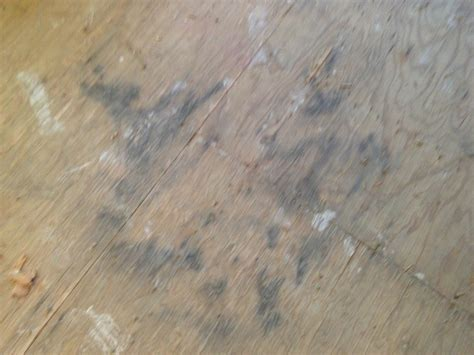 Is This Mold On Our Subfloor?   DIY Forums