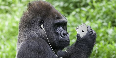 The Best Tribute Songs About Harambe, the Dead Gorilla