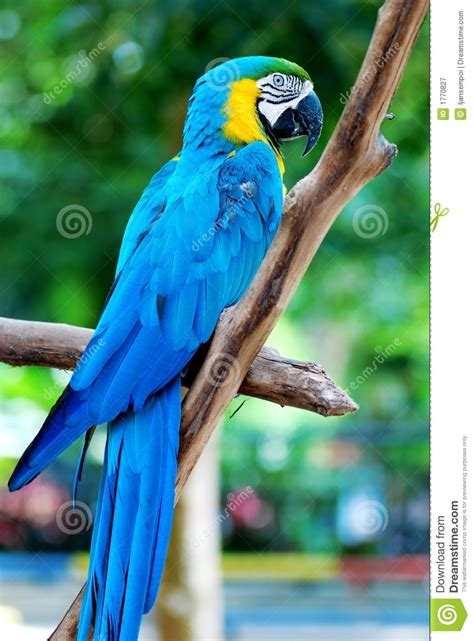 Colorful parrot stock image