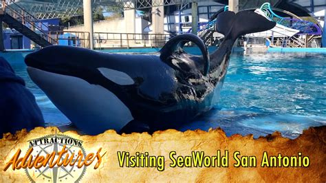 Visiting SeaWorld San Antonio for the First Time
