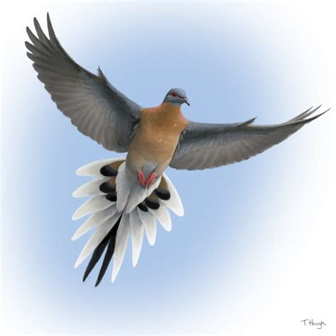 The Great Passenger Pigeon Comeback