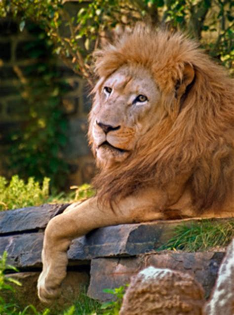 The Philadelphia Zoo Is Partnering With National