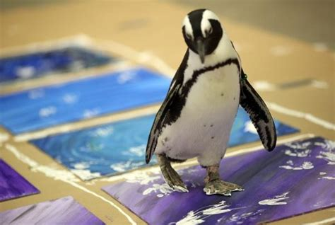Public joins Columbus Zoo penguins in producing paintings