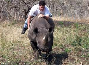 Would it be plausible to ride a rhinoceros into battle